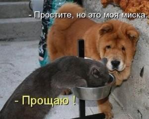 006_11102013
